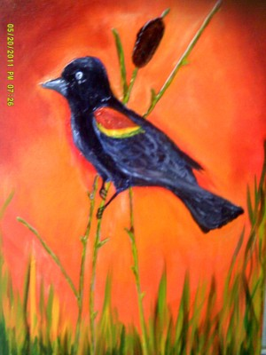 Redwinged Black Bird